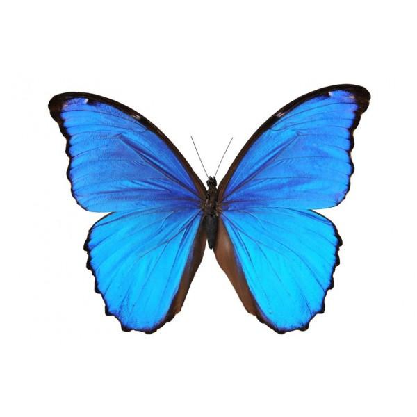 """Papillon de l'institut de beauté """"Boudoir et soins"""""""