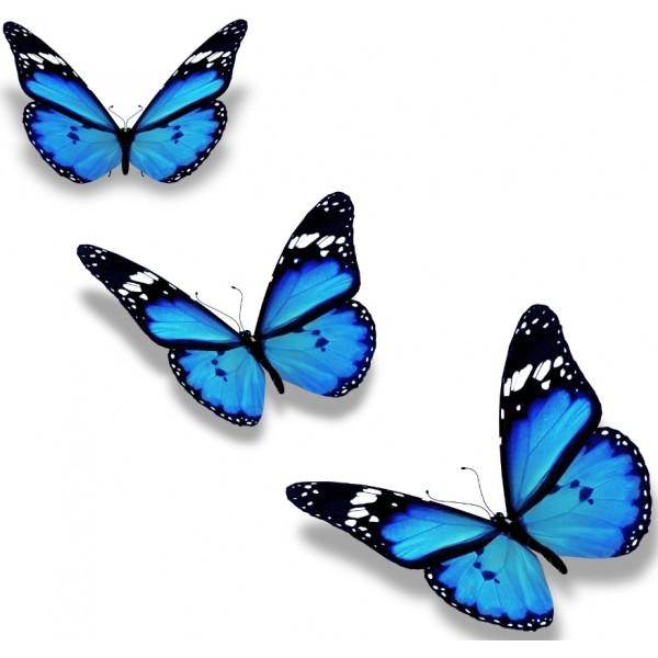 envolée papillon Boudoir et soins